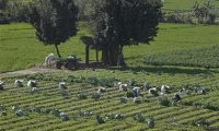 Egyptian agriculture: Incentives, obstacles